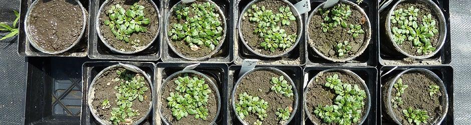 baby-plants-940x250